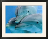 Bottlenose Dolphins  Three Close-Up of Heads Underwater