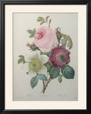 Rose  Anemone and Clematis