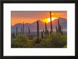USA  Arizona  Saguaro National Park Sunset on Desert Landscape