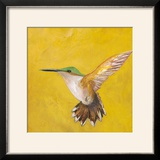 Sweet Hummingbird II