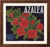 Azalea Brand - Porterville  California - Citrus Crate Label