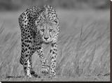 Focused Predator
