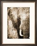 African Animals I - Sepia
