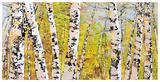 Treescape 21316 Reproduction d'art par Carole Malcolm