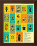 Common Beetles of North America