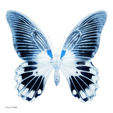 Miss Butterfly Agenor Sq - X-Ray White Edition