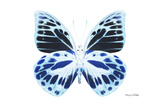 Miss Butterfly Prioneris - X-Ray White Edition