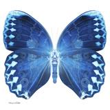 Miss Butterfly Formosana Sq - X-Ray White Edition Papier Photo par Philippe Hugonnard