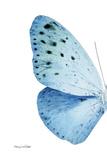 Miss Butterfly Euploea - X-Ray Left White Edition Papier Photo par Philippe Hugonnard