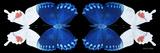 Miss Butterfly Duo Formohermos Pan - X-Ray Black Edition II Papier Photo par Philippe Hugonnard