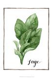 Watercolor Herbs VI