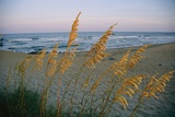 Grasses In The Foreground Of A Coastal Beach Scene Sway In The Breeze