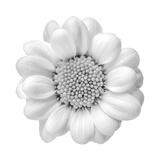 Floral Study - Faith