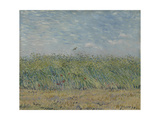 Wheatfield with Partridge  1887