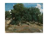 Fontainebleau: Oak Trees at Bas-Bréau  1832-3