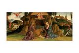 The Nativity  1480s