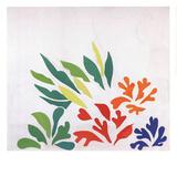 Acanthes Reproduction d'art par Henri Matisse