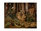 A Hare in the Forest  c 1585