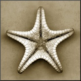 Sugar Starfish Bottom