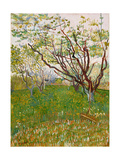 The Flowering Orchard  1888