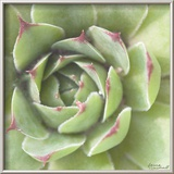 Garden Succulents II Color Reproduction encadrée par Laura Marshall