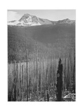 "Pine Trees Snow Covered Mts In Bkgd ""Burned Area Glacier National Park"" Montana 1933-1942"