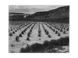 "Looking Across Corn  Cliff In Bkgd ""Corn Field Indian Farm Near Tuba City Arizona In Rain 1941"""
