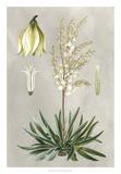 Tropical Varieties I