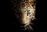 Shadowy Leopard