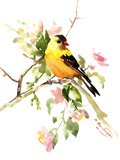 American Goldfinch Songbird