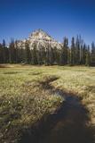 Reids Peak Rising Above Reids Meaadow  Lofty Lake Loop  Uinta Mountains  Utah