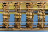 Railroad Bridge Reflection