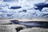 River in the Marsh I