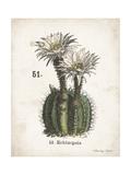 Cacti IV