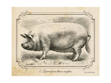 Farm Pig II