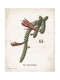 Cacti III