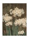 Petit Jardin Narcissus