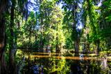 Cypress Pond I