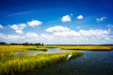 Wetland Herons II