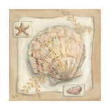 Sandy Scallop