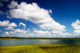 Wetland Herons I