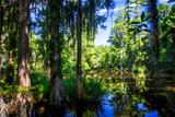 Cypress Pond II