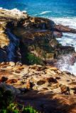 La Jolla Sea Lions I Papier Photo par Alan Hausenflock