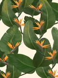 Fleurs tropicales Reproduction d'art par Laura Graves