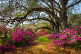 South Carolina Spring Flowers Charleston SC Lowcountry Scenic Nature Landscape with Blooming Pink A