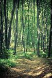 Mysterious Dark Forest near Rzeszow  Poland