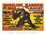 Gargantua  the Great Gorilla - Ringling Brothers and Barnum & Bailey Circus