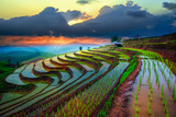 Terraced Paddy Field in Mae-Jam Village   Chaingmai Province   Thailand