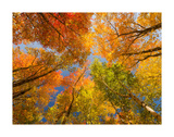 Autumn Spendour