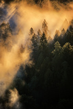 Fog & Light Mix Abstract Mount Hood Wilderness Sandy Oregon Pacific Northwest